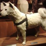 Estatua del perro Hachiko en Tokyo