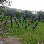 Cementerio militar alemán en Cuacos de Yuste