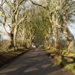 The Dark Hedges, un peculiar sendero en Irlanda