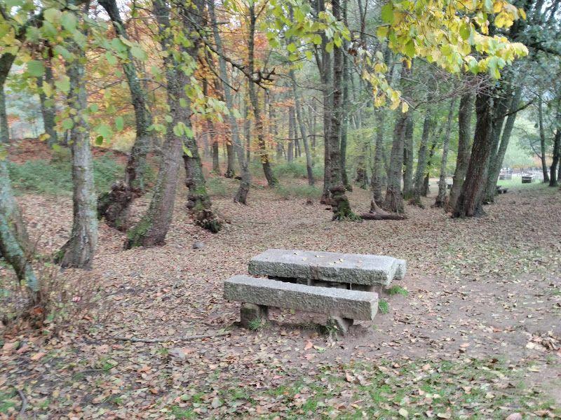 arboles castañar tiemblo otoño