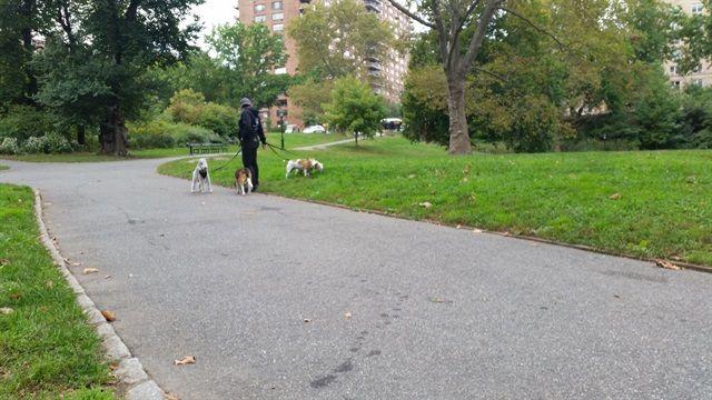 Paseadores de perros Nueva York