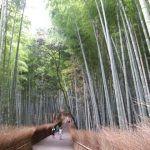 El bosque de Arashiyama, un lugar único repleto de bambús en Kioto