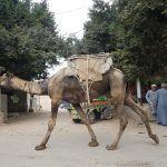 Viaje por Jordania y Egipto: datos generales