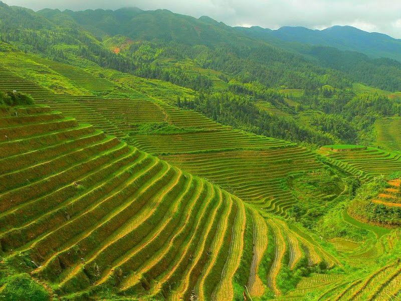 terrazas arroz longsheng