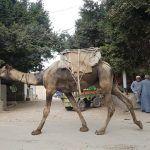 Mis impresiones y opiniones sobre Egipto
