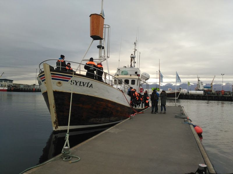 barco avistamiento ballenas husavik