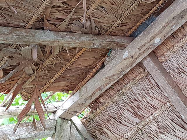 Boa enrollada en la selva de Tambopata