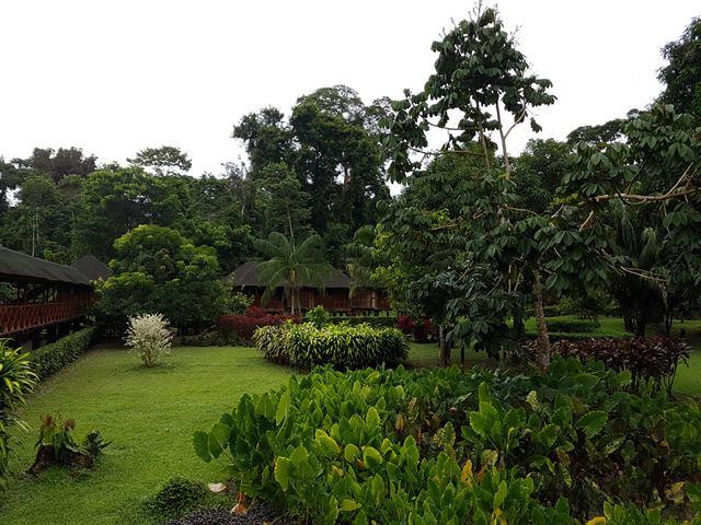 Alojamiento en Eco Amazonia Lodge