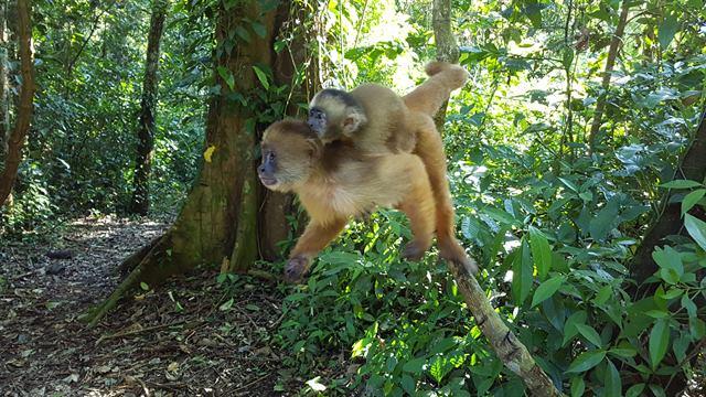 Isla de los monos, en Eco Amazonia Lodge