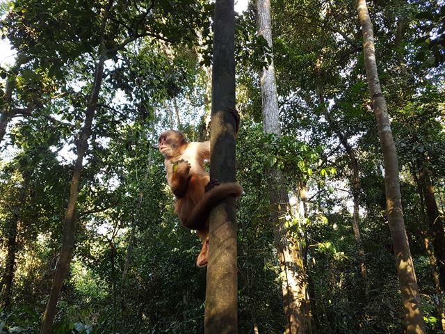 Mono en la selva amazónica peruana