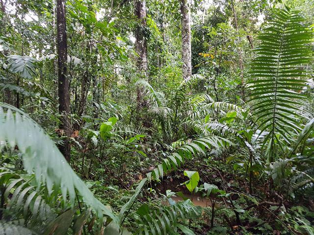 Dentro de la selva amazónica peruana