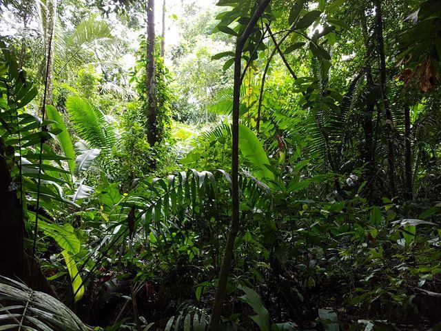 Selva amazónica en Eco Amazonia Lodge