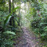 Reserva Nacional de Tambopata, la selva amazónica peruana
