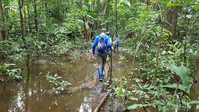 Tronco para cruzar el agua de la selva