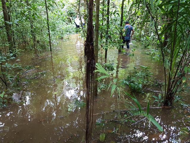 Zona de agua en la selva peruana