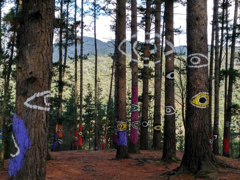 ojos pintados en árboles en el bosque de oma