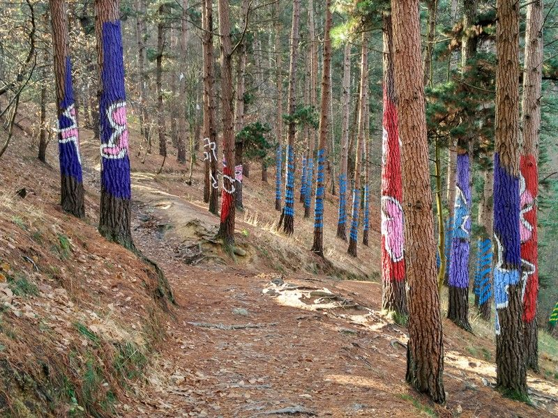 árboles pintados bosque de oma