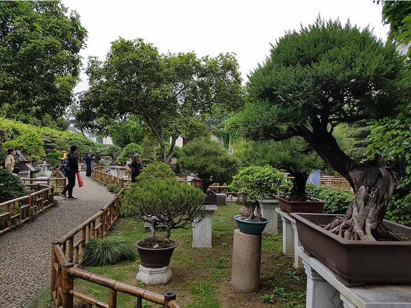 Zona de bonsáis en el jardín Liu Yuan