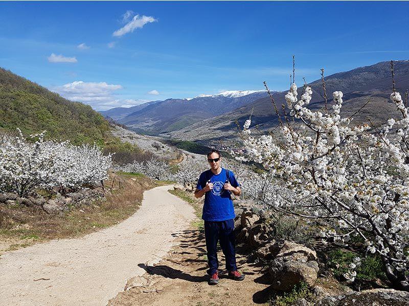 Cerezos del Jerte en la ruta de las Nogaledas