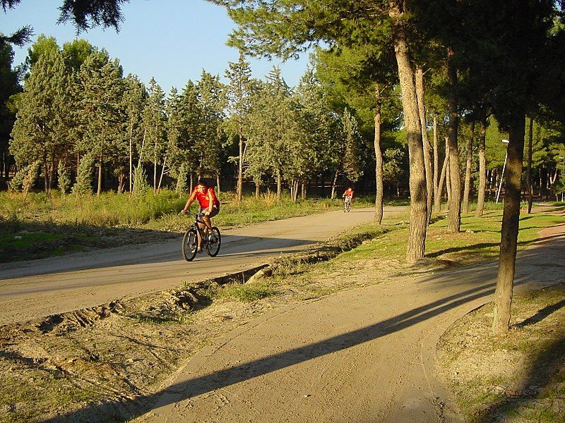 parque forestal entrevias