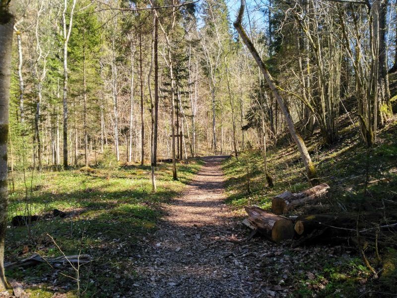 sendero en el parque nacional de gauja